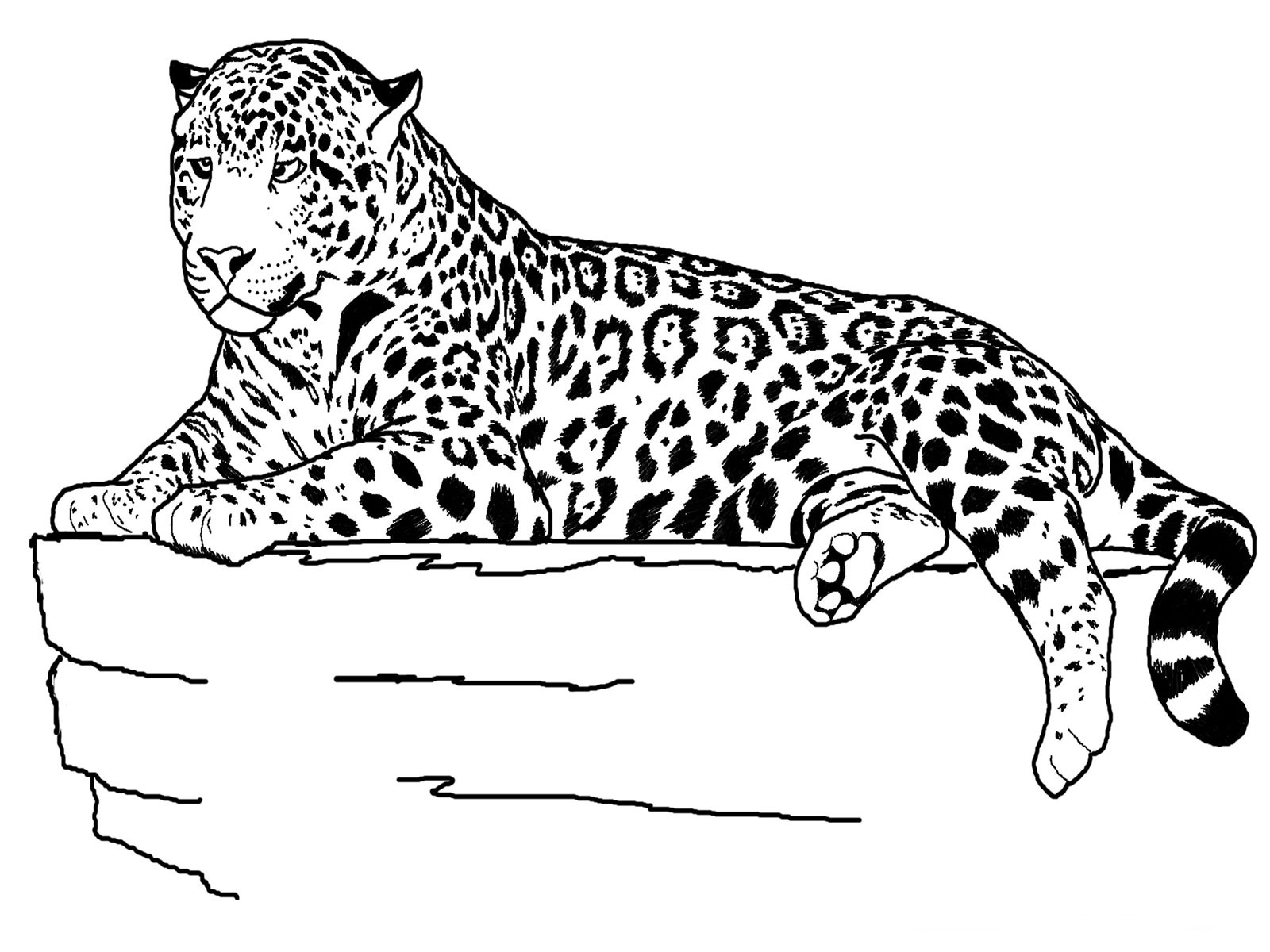 Animal Coloring Pages (16) | Coloring Kids