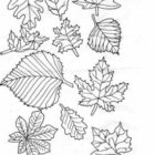 Autumn-coloring-pages-100-275×330