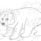 Bear Coloring Pages (1)