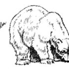 Bear Coloring Pages (9)