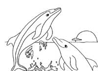 Dolphin Coloring Pages (13)