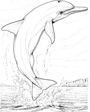 Dolphin Coloring Pages (15)
