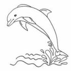 Dolphin Coloring Pages (8)