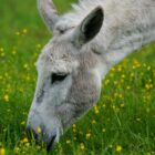 donkey-cool facts7