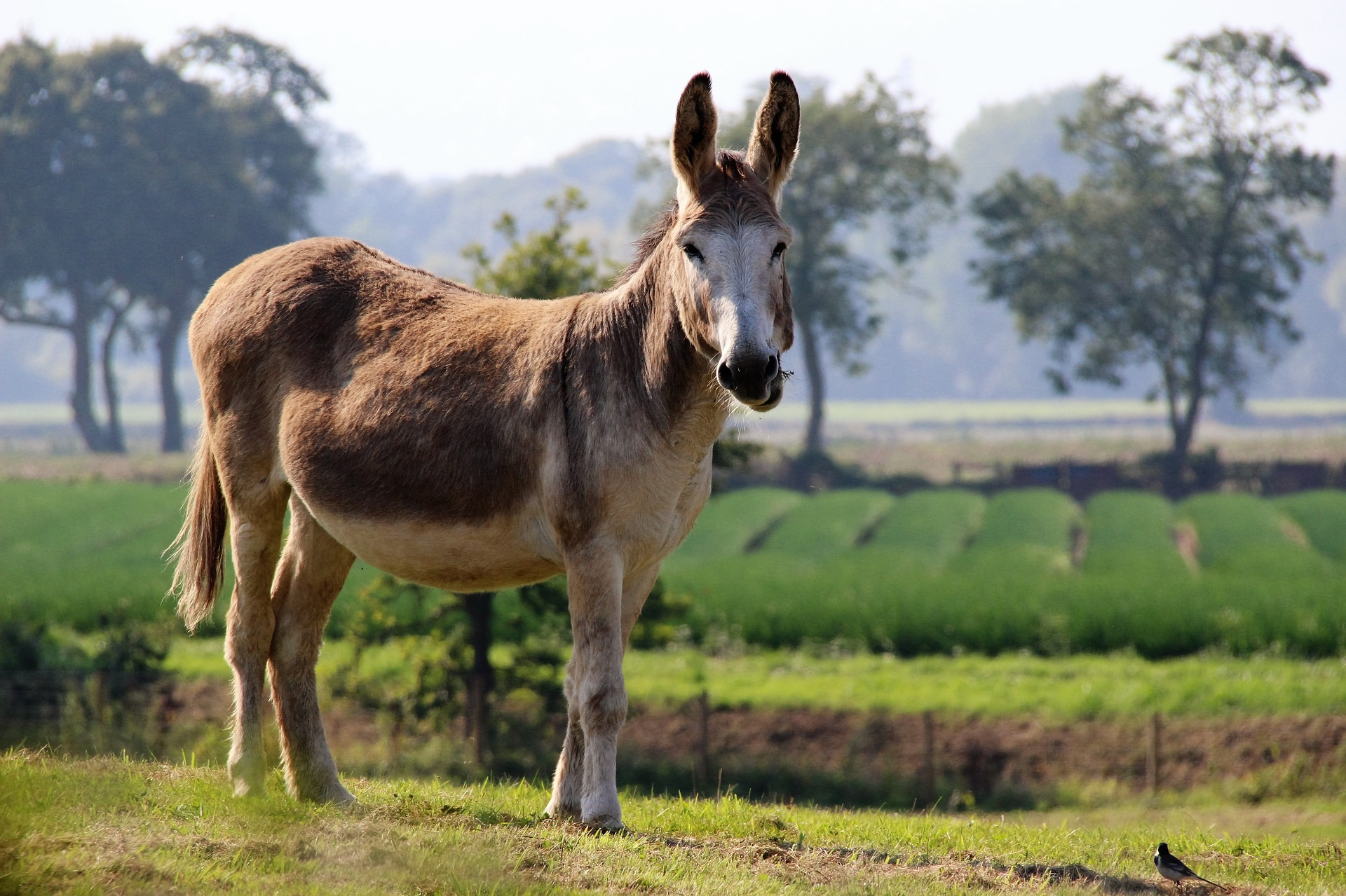 donkeys-cool facts4