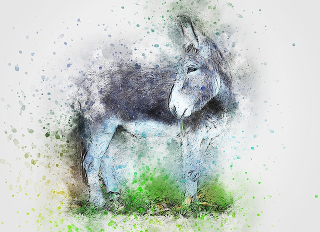 donkey-cool facts