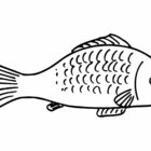 Fish Coloring Pages (11)