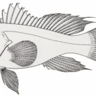 Fish Coloring Pages (6)