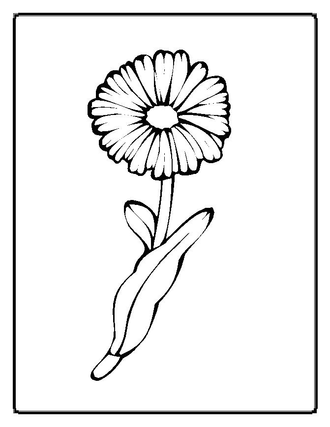 Flower Coloring Pages (20)