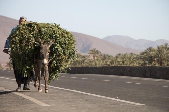 donkeys carrying load