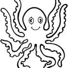 octopus11