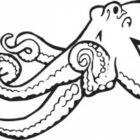 octopus5