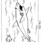 Shark Coloring Pages (14)