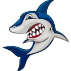 Shark Picture
