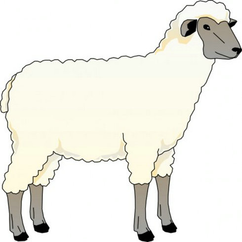 sheepkids