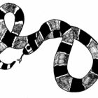 Snake Coloring Pages (3)