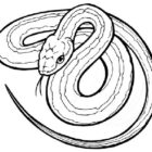 Snake Coloring Pages (6)