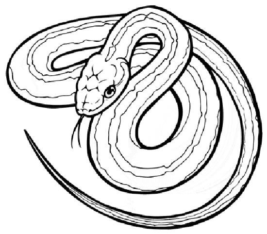 Snake Coloring Pages 6 Kids