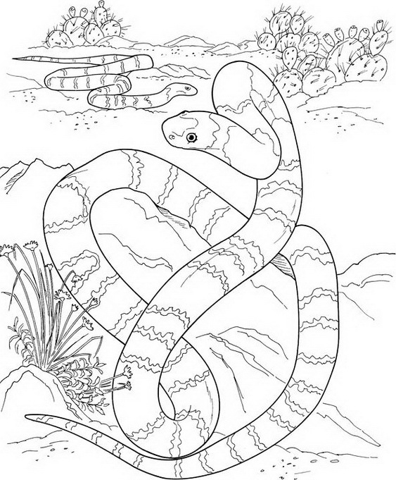 Snake Coloring Pages (7)