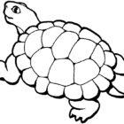 turtles15