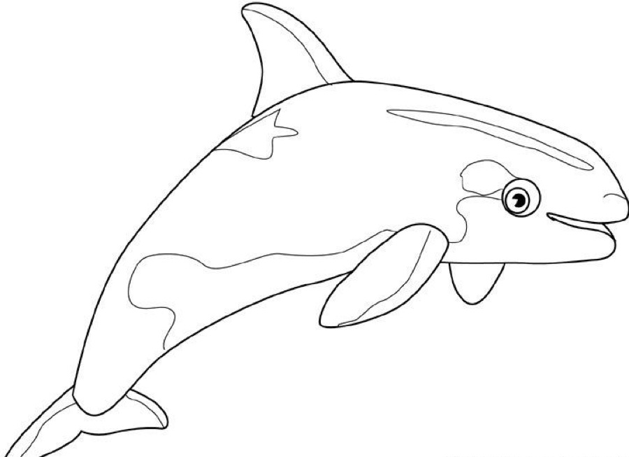 Whale Coloring Pages
